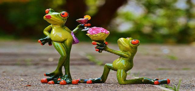 sapo oferecendo flores a uma sapo fêmea