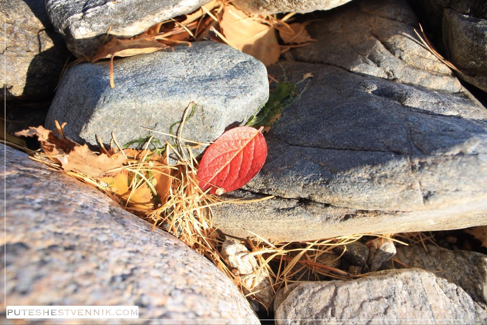 Красный лист между камней