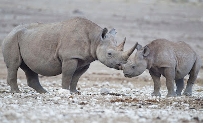 black-rhino-mom-and-baby