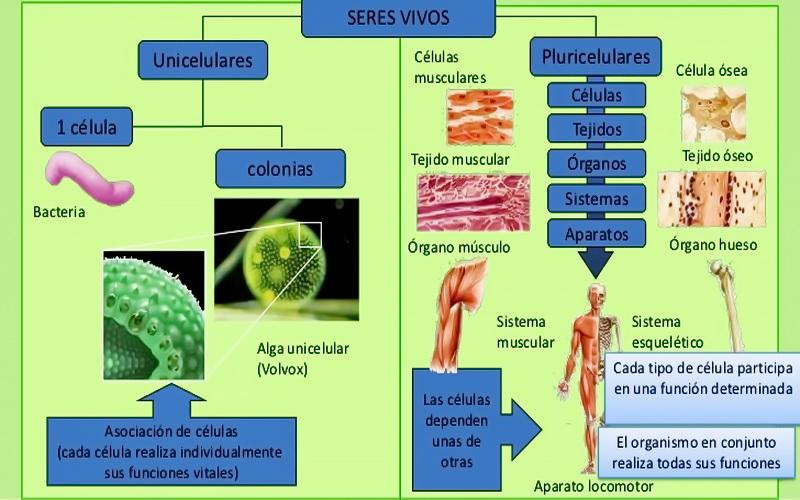 que son los organismos unicelulares seres vivos