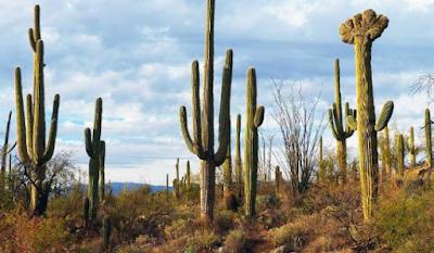 Cara Tumbuhan Menyesuaikan Diri Terhadap Lingkungan
