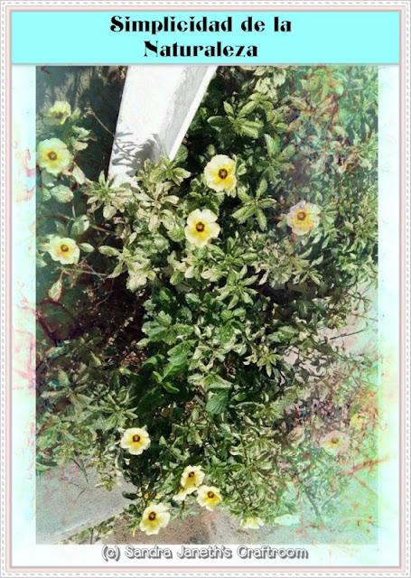 Florecitas, Naturaleza