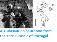 http://sciencythoughts.blogspot.co.uk/2014/07/a-turiasaurian-sauropod-from-late.html