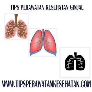 Tips Perawatan Kesehatan Paru-paru