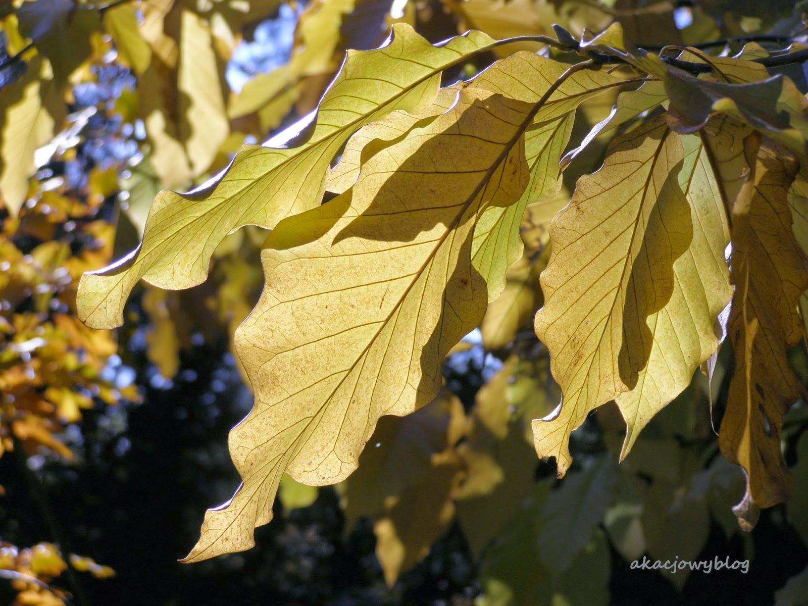 Jesienna pora.