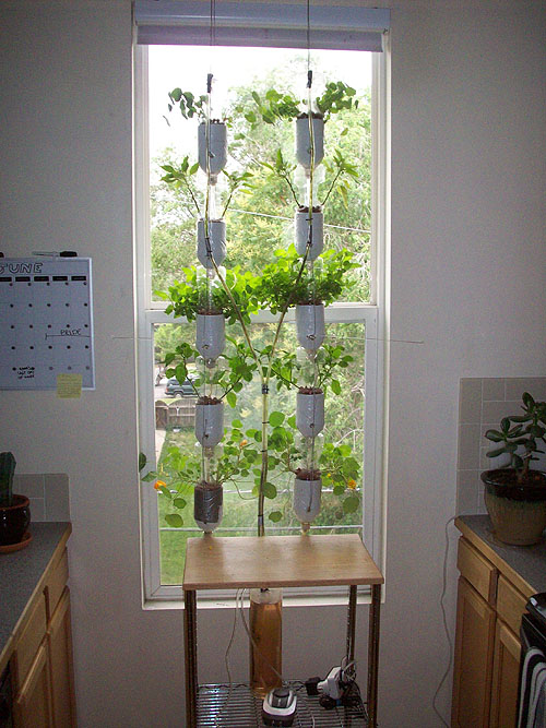 Desperate Gardener November 2011