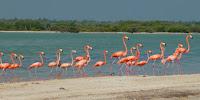 Rio Lagartos, visiter la réserve naturelle et voir les flamants roses