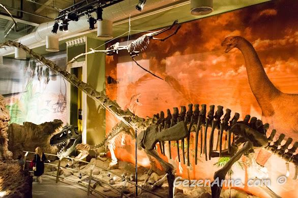 müzede sergilenen dinozor iskeletleri, Jurassic Land İstanbul