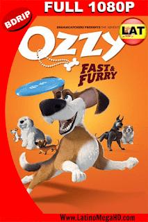 Ozzy, Rápido y Peludo  (2016) Latino Full HD BDRIP 1080P - 2016