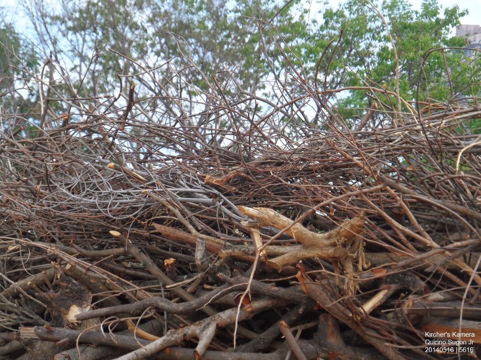 Tangled branches in Niccolo Jose's Blue Eagle's Nest