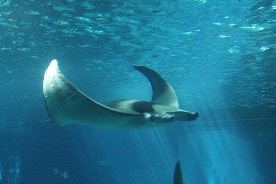 25 melhores aquários do mundo.