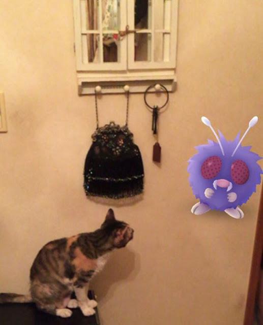 Estas fotos prueban que los animales pueden ver Pokemones