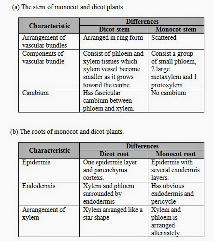 conclusion of plant histology An angiosperm plant body is composed of two basic types of tissues namely  meristematic and permanent tissues meristematic tissue is formed by.