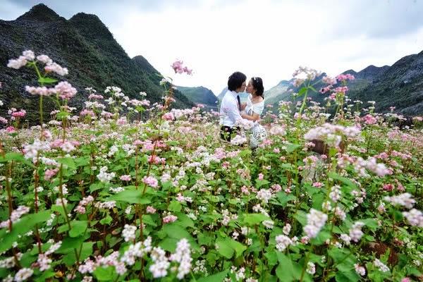 Hoa tam giác mạch nở mùa nào