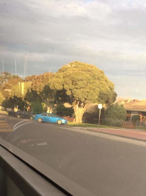 Esta árvore parece um brócolis