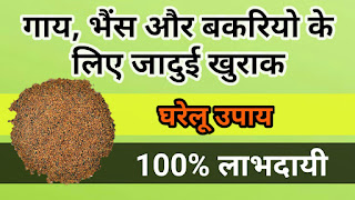 Best feed (Khurak) for Cow, Buffalo and Goats.