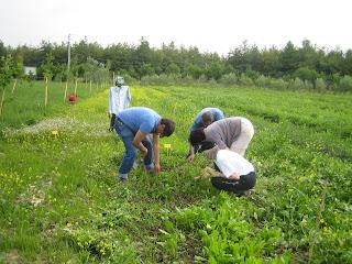 Risultati immagini per Bioregionalismo in campagna