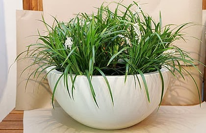 Indoor plants simple and beautiful | Garden Park