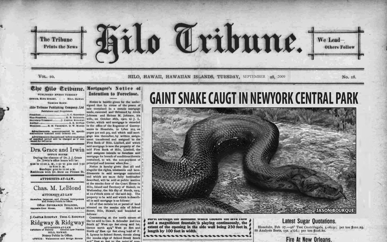 How to talk to any girl: Giant snake caught in central park