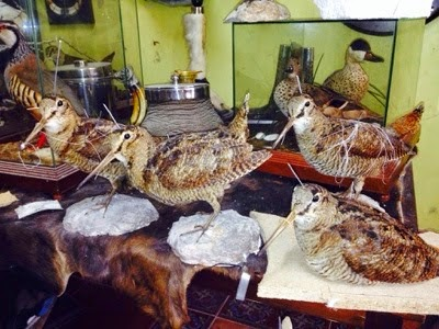 Taxidermia Natura