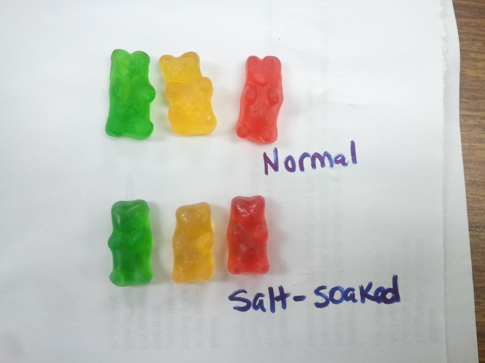 Mme Merriman S Classroom Gummy Bear Osmosis
