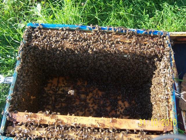 Η καταπολέμηση της Βαρρόα! Ολόκληρο το βίντεο με τις εμπειρίες του επαγγελματία μελισσοκόμου...
