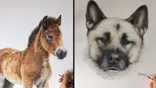 00-Bethany-Vere-Colored-Pencils-Realistic-Animal-Drawings-www-designstack-co