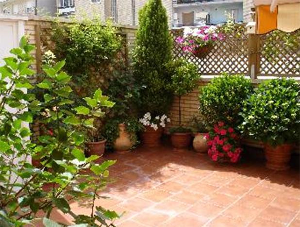 Patricia l pez dise o floral cuidados de las plantas en - Plantas para terraza con mucho sol ...