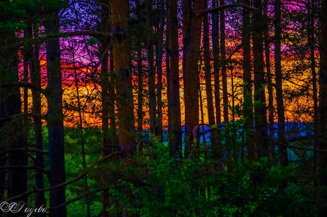 Залез-в-гората-Sunset-in-the-woods