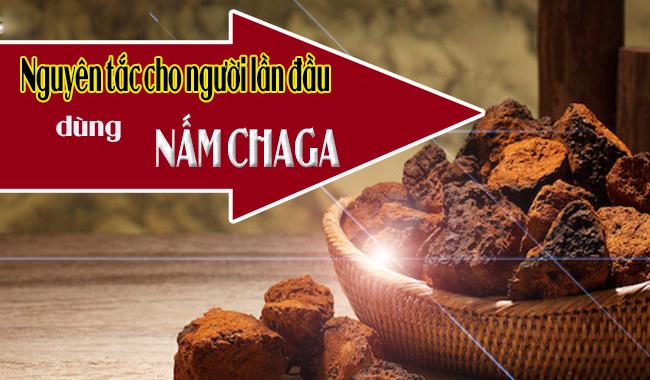 Nguyên tắc cho người lần đầu dùng nấm Chaga