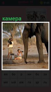 651 слов слона снимают на камеру оператор мужчина 18 уровень