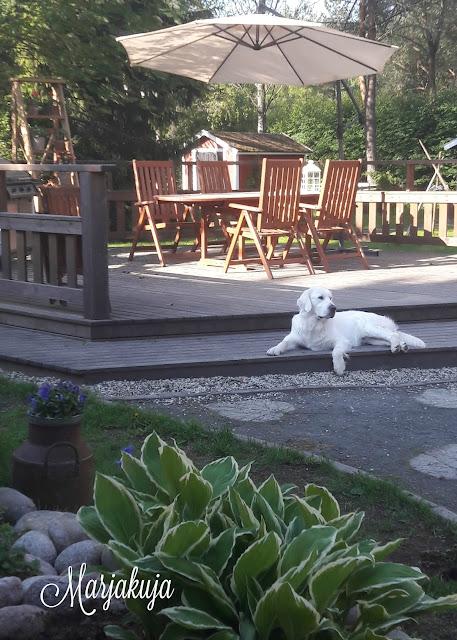 koira kesalla terassilla
