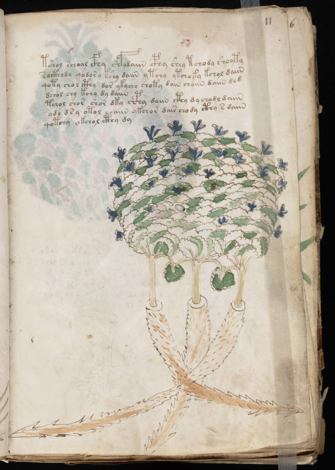 manuscrito023