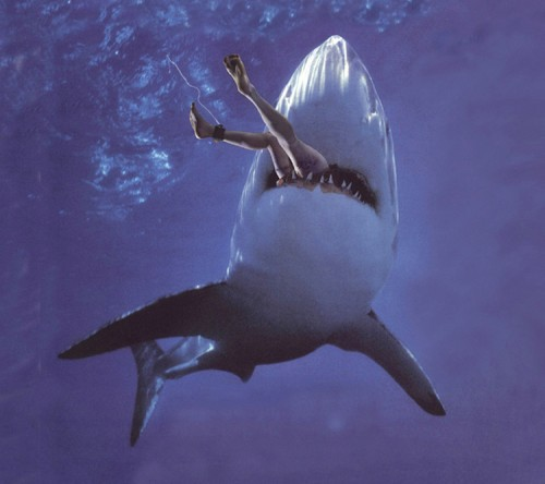 Peek Into My Thoughts: I dreamed of great white shark