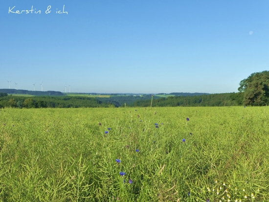 Landschaftsfoto Felder im Hunsrück frühmorgens