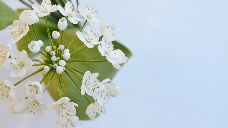 White Premium Flowers Image HD
