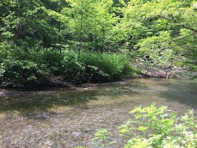 石ヶ戸休憩所から見る奥入瀬川