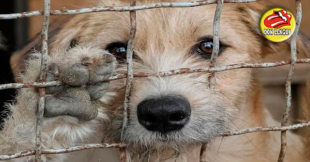 En Lomas del Este secuestran a las mascotas y piden rescate por teléfono
