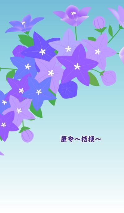 Flowers -balloon flower-