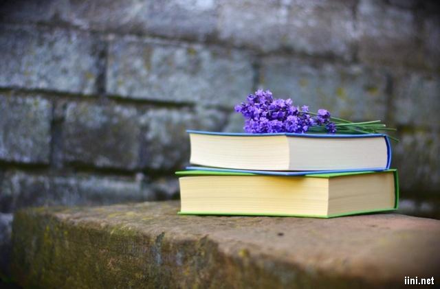 ảnh nghệ thuật hoa tím và sách