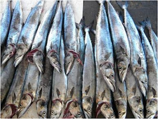 Cara Mancing Ikan Tenggiri