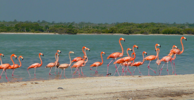 Rio Lagartos : réserve naturelle et flamants roses (Mexique)