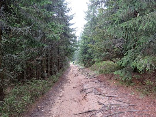 Droga z Kiczory na Polanę Gabrowską Dużą.