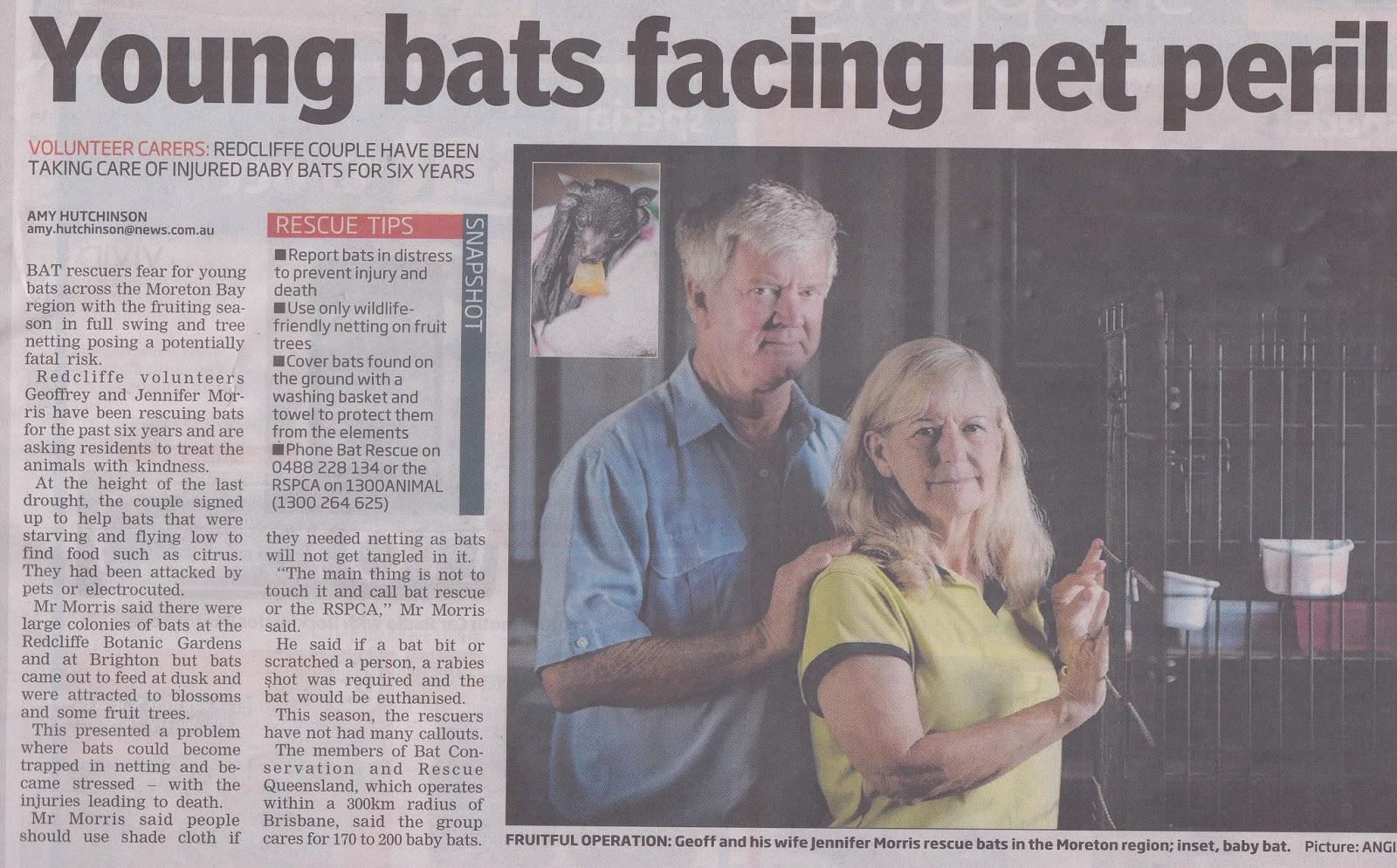 Netting   Young bats facing net peril