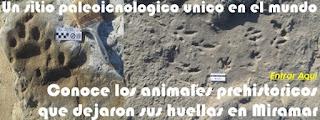 http://www.museodemiramar.com.ar/museodemiramar/naturales/huellas_fosiles.htm