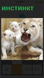 тигрица защищает потомство
