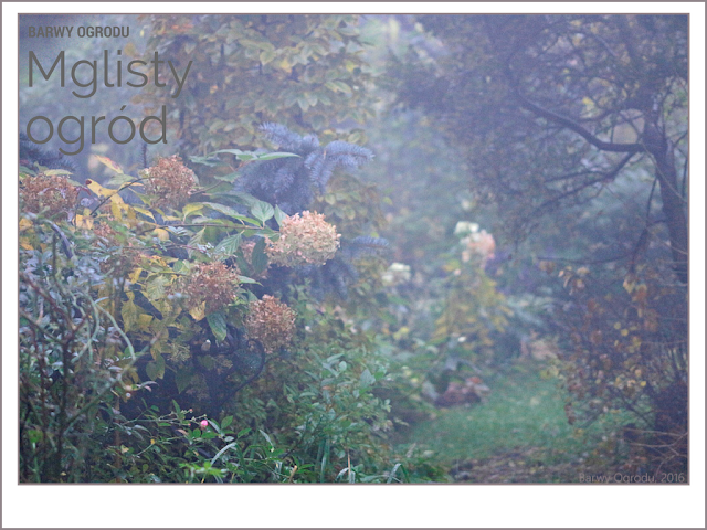 mglisty ogród