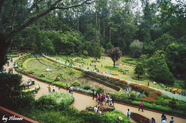 Ooty-gradina-botanica-obiectiv-turistic