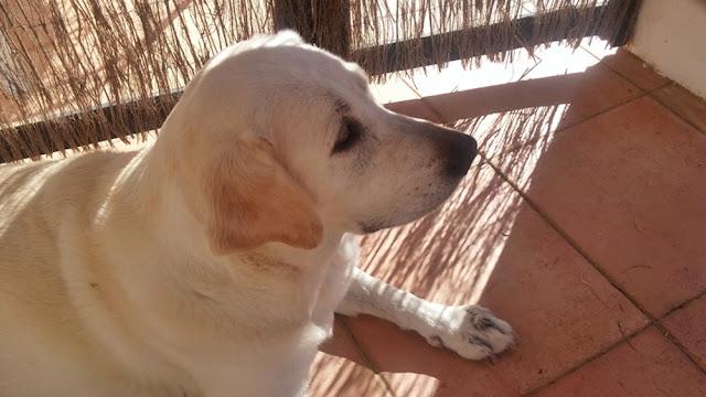 Beatriz, a cadela da Quinta da Boavista, Portel