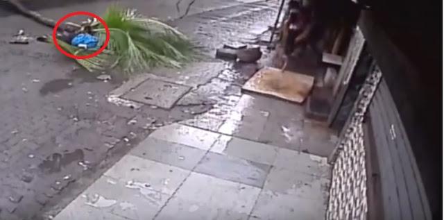 بالفيديو : لحظة وفاة مذيعة هندية بعد سقوط نخلة فوقها